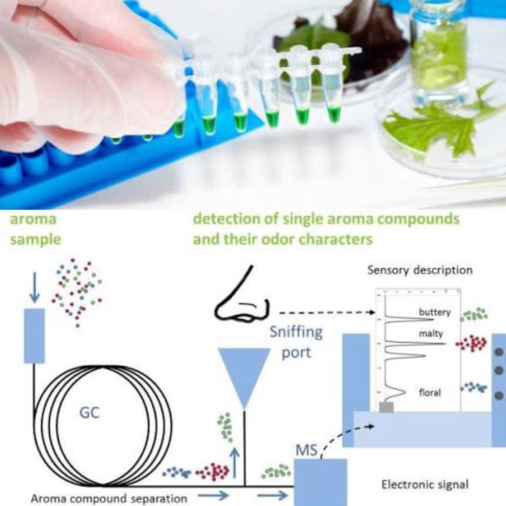 Best  Gas Chromatography Ideas On   Chemistry Noble