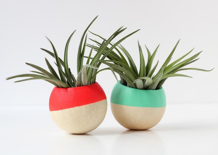 These little lovelies deserve a fabulous planter for being so wonderfully low-maintenance.