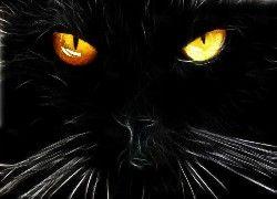 Czarny, Kot, Oczy, Fraktal