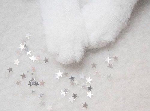 aesthetic, animal, cat, cute, glitters, pale, soft grunge, stars, white