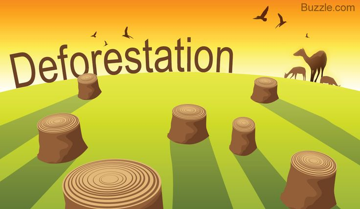 How do Humans Affect the Environment - Deforestation