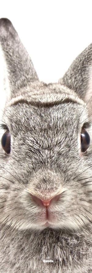 Bunny ❤ by abigail