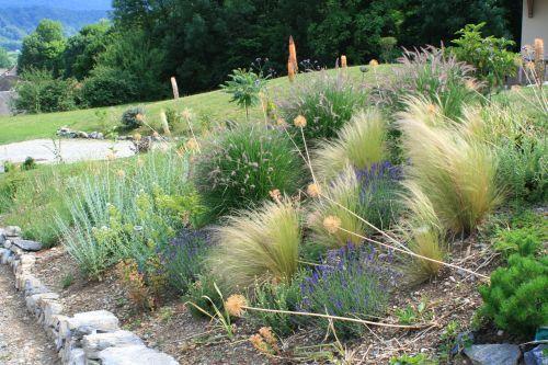 plantation talus graminé | Retour sur le talus - Le Jardin d'Erémure
