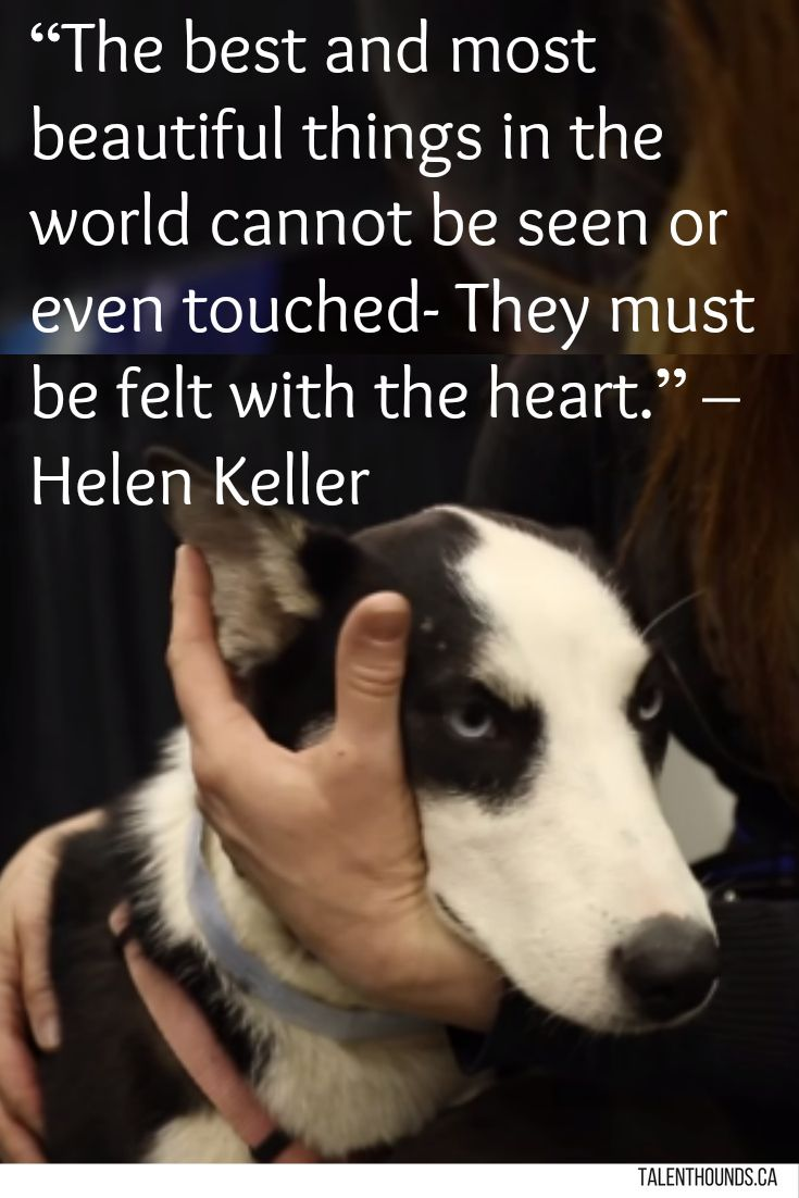 280 best Quotes about dogs images on Pinterest