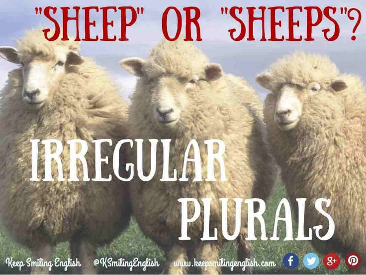 "Irregular Plurals: 6 ""Rules"" You Must Know"
