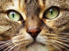 How To Get Rid Of Cat/Dog Urine Smells.  Cat/Dog Urine Odors are easily removed