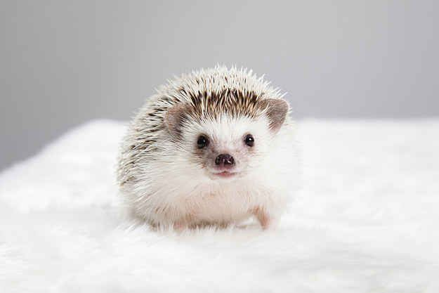 """""""A mini smile from a mini hedgehog is all anyone will ever need to get through the day, I promise."""""""