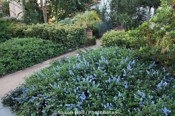 1000 Images About Interesting Useful California Native Plants On Pinterest Gardens