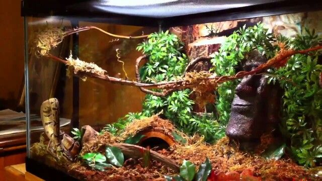 Jungle setup for royal python