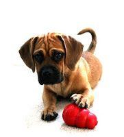 6 dicas para seu cachorro ficar sozinho em casa - Tudo Sobre Cachorros