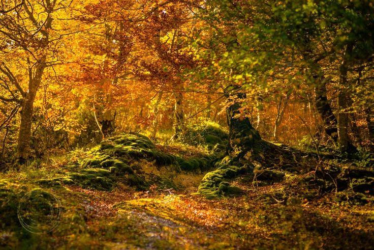 SimoneDF Photography - Review: Sleeklens Through the Wood #landscape #art #lightroom #presets
