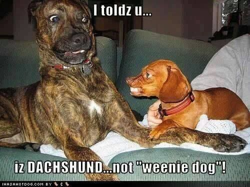 And they say Pit Bulls are Mean! Ha!!
