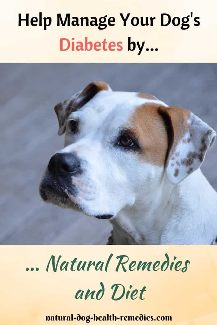 Diabetes In Dogs Diabetic Dog Natural Dog Health Dog Health