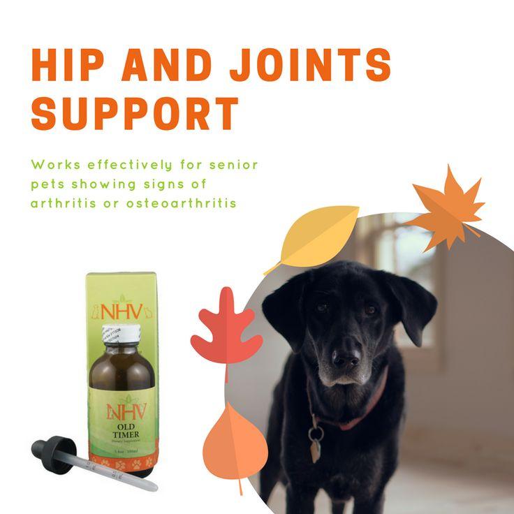 Holistic remedies for dog arthritis