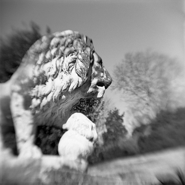 Brownie Hawkeye Flash with flipped lens. Tri-X souped in Caffenol-C-L 50-minute stand. No post-processing.