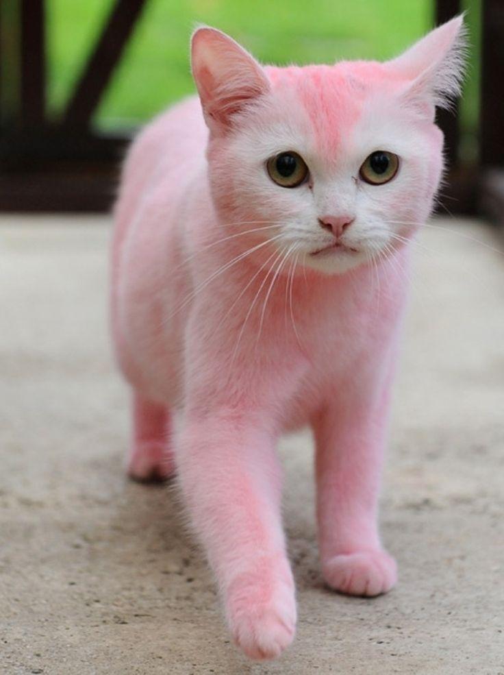 f9712b30f9c7afaebe1fcb95cfc4713d--pink-p