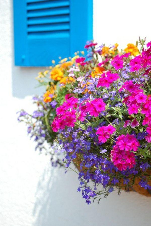 Luxury  Balkonbepflanzung Ideen tolle Blumen f r Balkon arrangieren