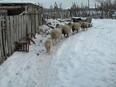 НАТУРАЛЬНОЕ ХОЗЯЙСТВО: Весна на деревне кому грязна, кому красна