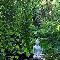 5 winterharte Pflanzen für den Dschungelgarten
