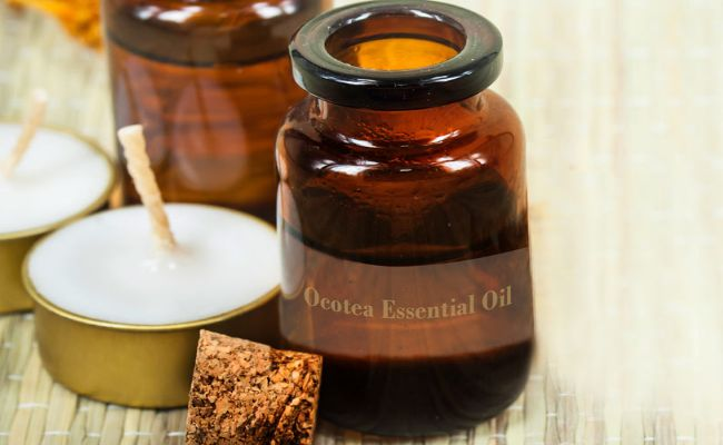 Top 15 health benefits Of Ocotea Essential Oil