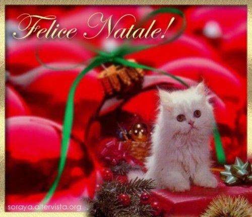 Buon Natale rosso con Gattino