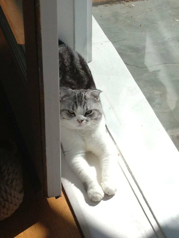 TAYLOR'S CAT!!! I repinned this from her I love her and her cat. So much. Forever. And ever. And ever.