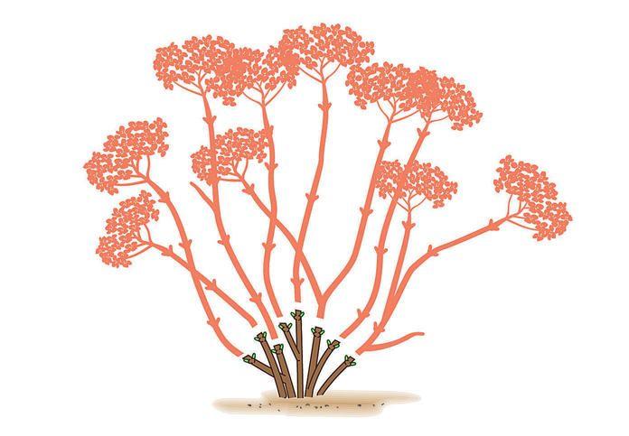die besten 25 kirschbaum pflanzen ideen auf pinterest. Black Bedroom Furniture Sets. Home Design Ideas