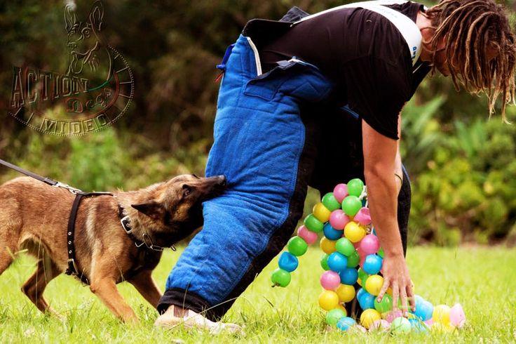 Aust Working Dog Rescue