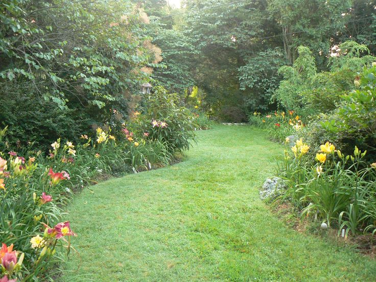 This is a shot of a wide winding grass path bordered by daylilies, a weeping cherry and ending with a weeping Japanese maple