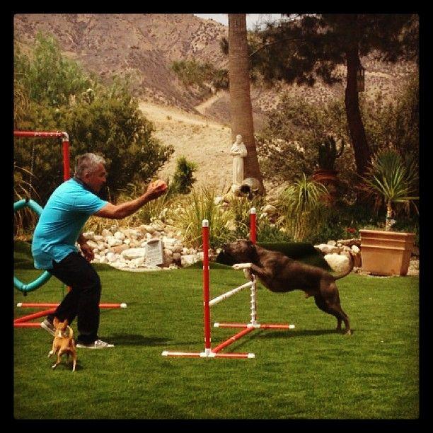 Cesar Millan Training A Hyper Dog