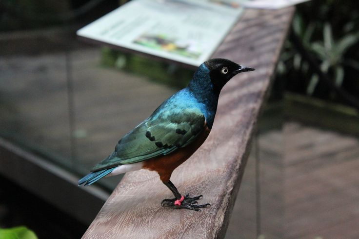 A bird at the Central Park Zoo in New York City | 3rd Culture Wife