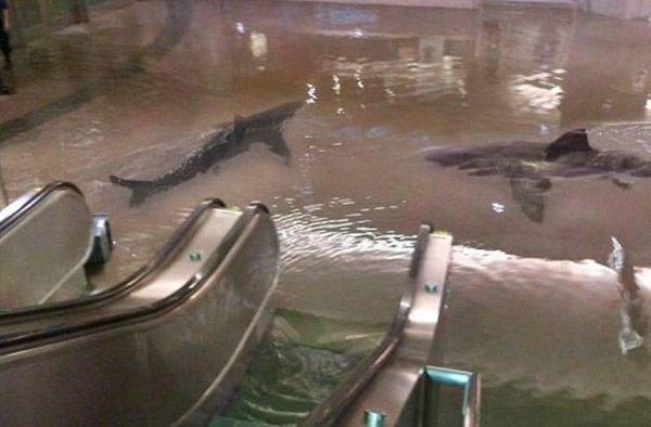 Sharks swimming in mall