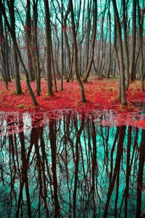 tree reflection in turquoise and rust via Angela Clark-Grundy