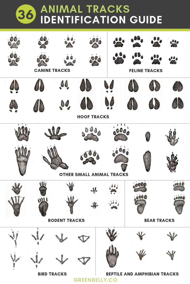 Craftsman Style Home Decorating Ideas: 36 Most Common Animal Tracks