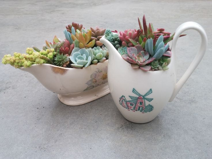 Get Creative With Succulent Planters Old Tea Cups And