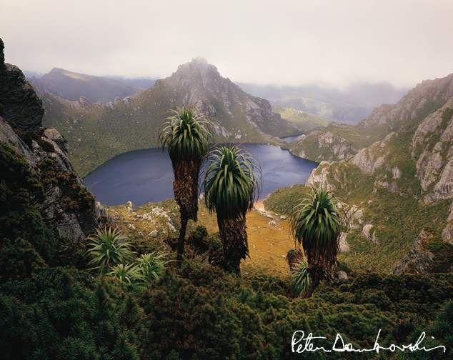 Peter Dombrovskis, Tasmania
