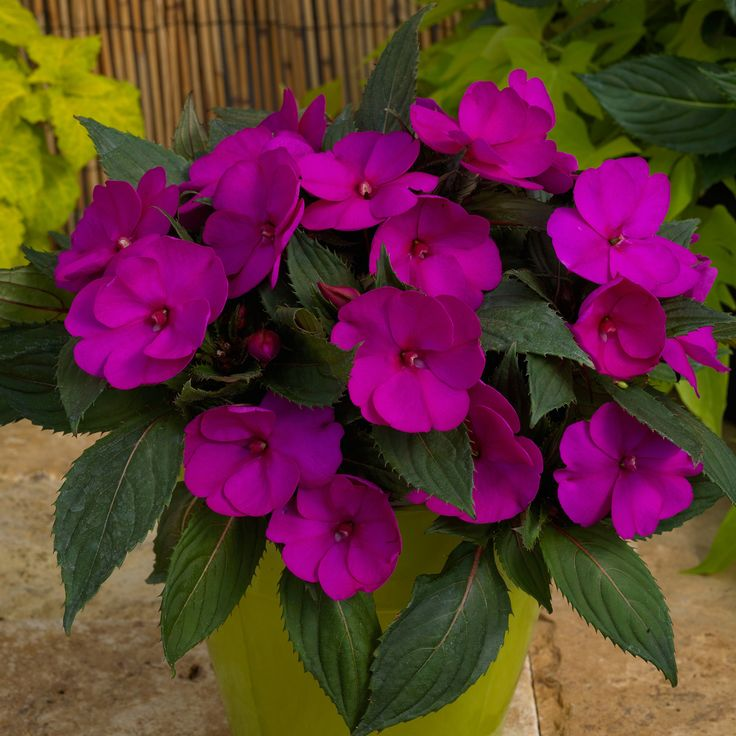 148 Best Compact Plants For Small Spaces Images On 400 x 300