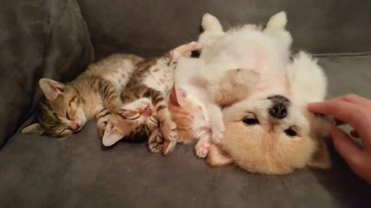 σκυλος και γατες κοιμουνται παρεα
