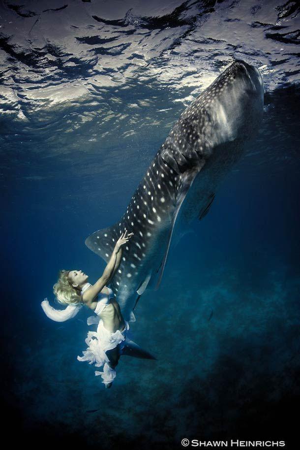 Une magnifique série de photographies sous-marines nées de la rencontre entre des mannequins, dont la sirène Hannah Fraser, et d'immenses requins baleines.