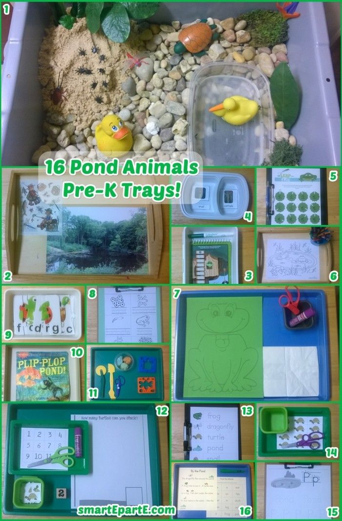16 Pond Animals Preschool Trays! We have fun with a big sensory bin and great printables from @jolanthe!
