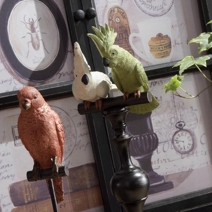 Duo de perroquets Museum