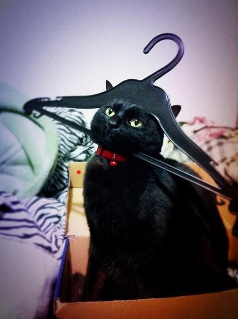 Ok, but seriously, do I look like a hammerhead shark or what?Hammerhead Sharks, Fashion Statement, Lady Gaga, Funny Cat, Wire Hangers, Kitty, Clothing Hangers, Black Cat, Baby Cat
