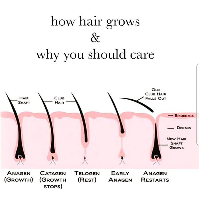 Love This Picture I Try To Teach The Stages Of Hair Growth