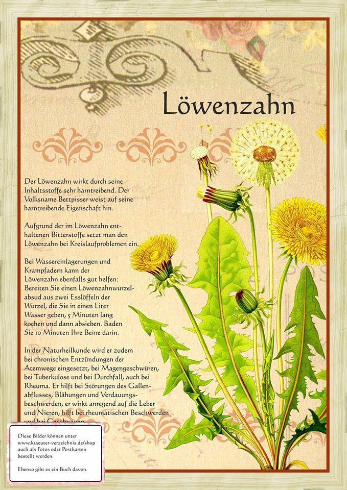Löwenzahn http://www.kraeuter-verzeichnis.de/