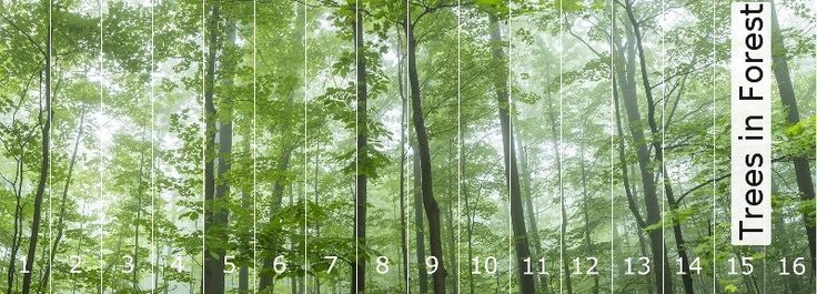 Tapete Trees in Forest   Panoramic Images®   Die TapetenAgentur