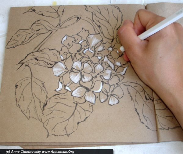 How To Draw Hydrangea Flowers Part I Flower Drawing Roses Drawing Rose Drawing