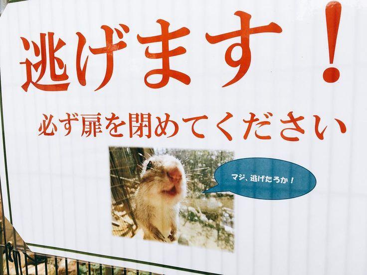 いいね!58件、コメント19件 ― keiさん(@sakitaroh_hana)のInstagramアカウント: 「「マジ、逃げたろか!」 ※ 所用で神戸にいったついでに#王子動物園 に行きました。#リスと小鳥の森 出入り口の看板に吹いてもた(*゚▽゚*) 逃げちゃったら大変やもんね ※…」