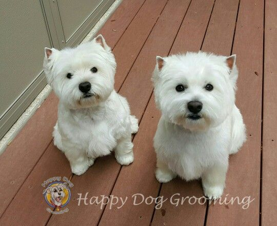 87 best images about Happy Dog Pet Grooming on Pinterest ... - photo#7