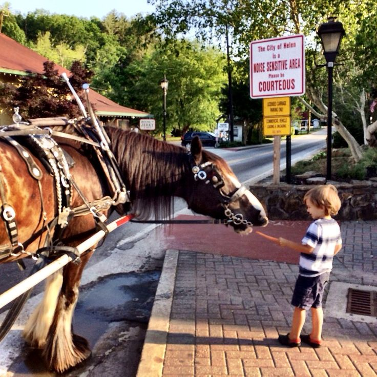 14 Things to do with Kids in Helen, GA