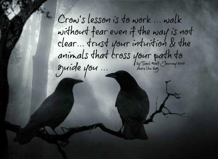 Crow's lesson is to work... walk without fear even if the way is not clear... trust your intuition & the animals that cross your path to guide you. - By Soul Wolf